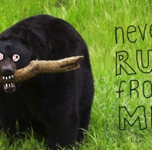 5 Things About Black Bears, and Why You are Likely to Die in August